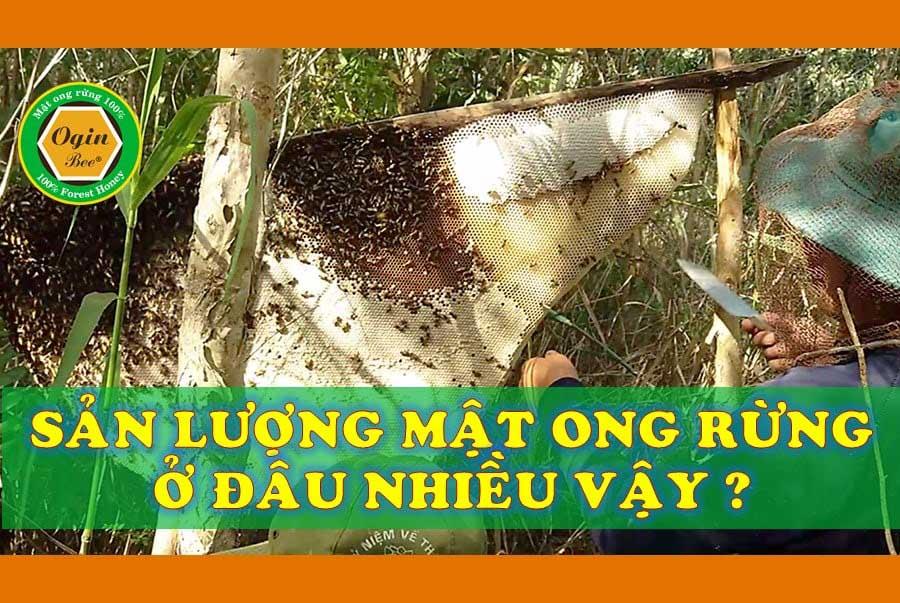 sản lượng mật ong rừng