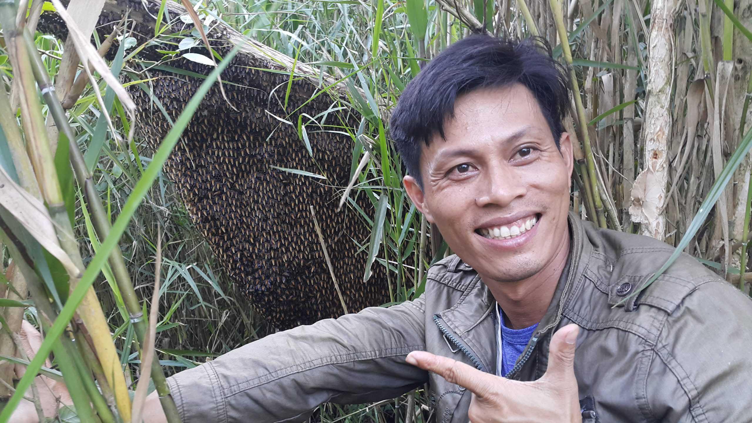 ăn ong trong rừng u minh