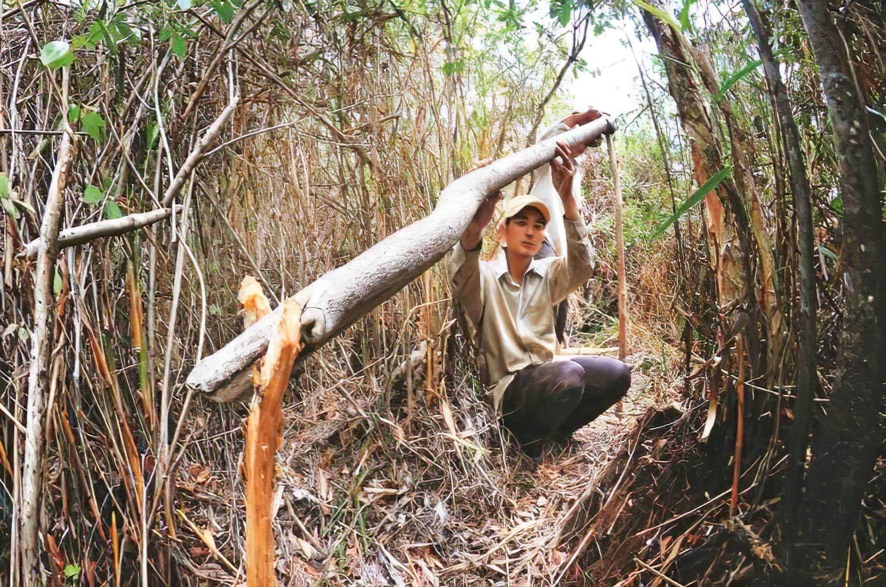 Nghề gác kèo ong ở rừng U Minh