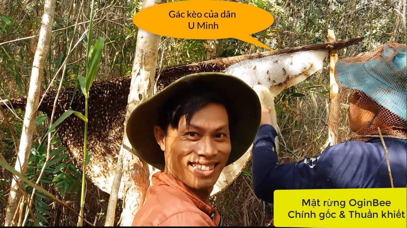 mật ong rừng U Minh hạ - 300ml