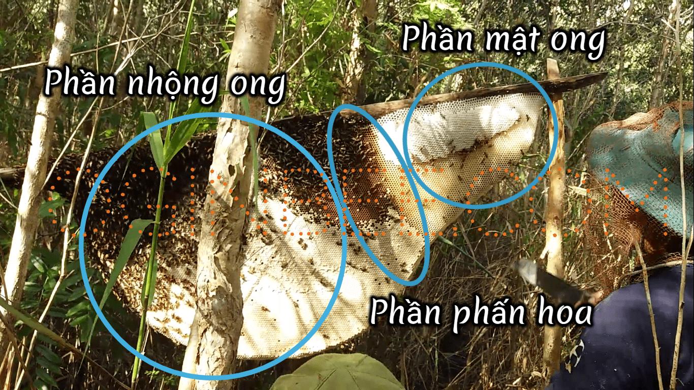 Mật ong rừng U Minh khai thác bằng gác kèo ong