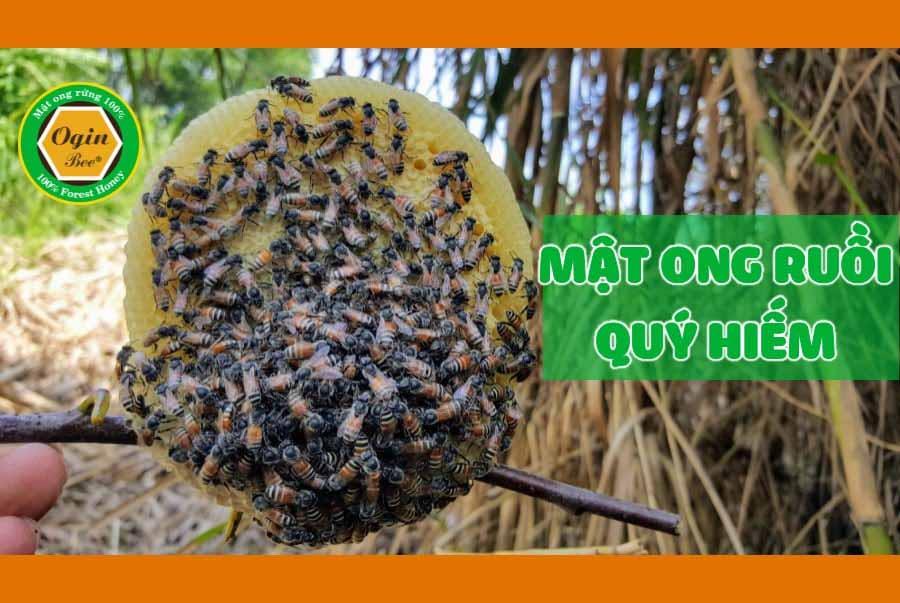 mật ong ruồi thiên nhiên