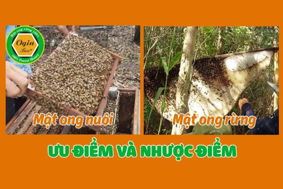 mật ong rừng và mật ong nuôi